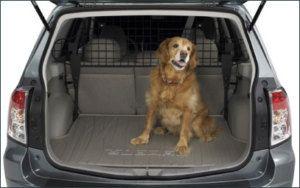 Toyota Highlander With Dog In Truck Toyota Highlander