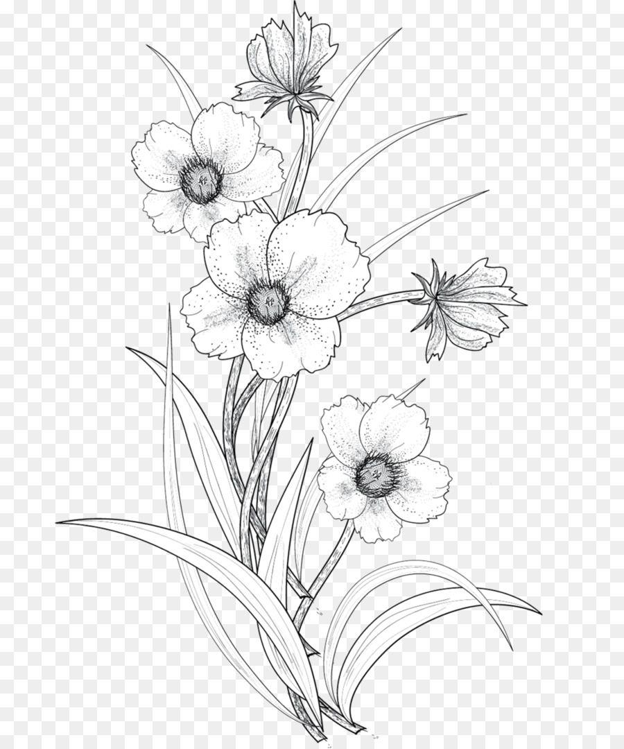 Drawing Flower Line Art Line Drawing Flowers Flower Line Drawings Flower Drawing Transparent Flowers