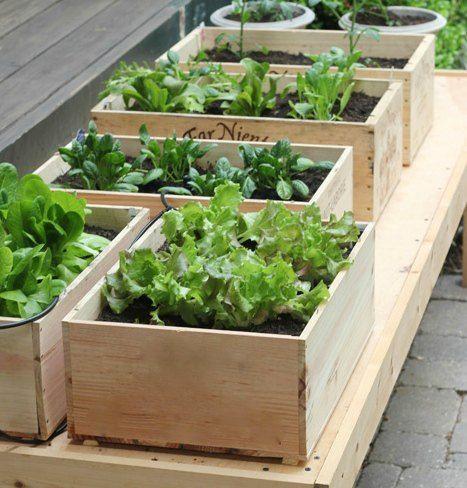 Vinkasser - trækasser som plante- og blomsterkasser til have, altan ...