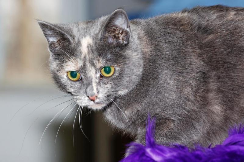Adopt Trinity On Petfinder Pets Animals Pet Adoption