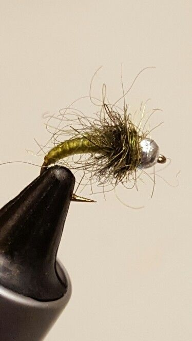 Olive stretch cord nymph