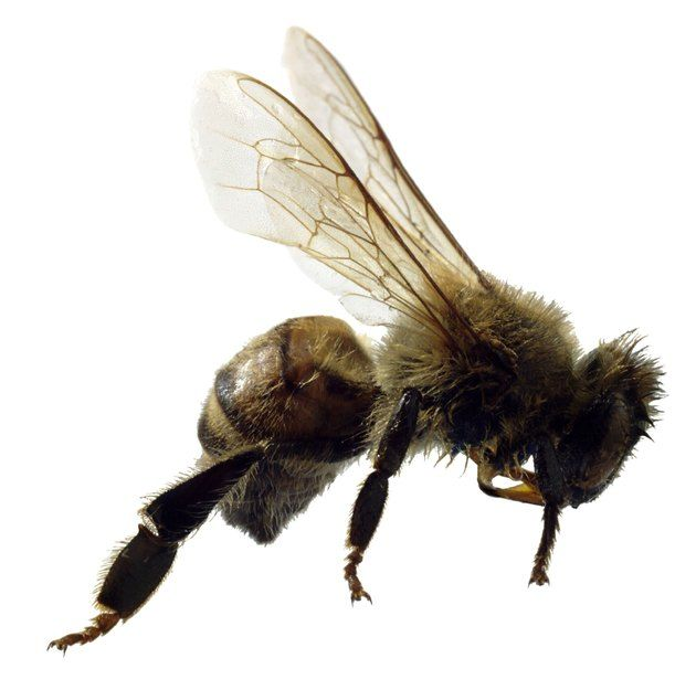 Pin on Beekeeping and Honey