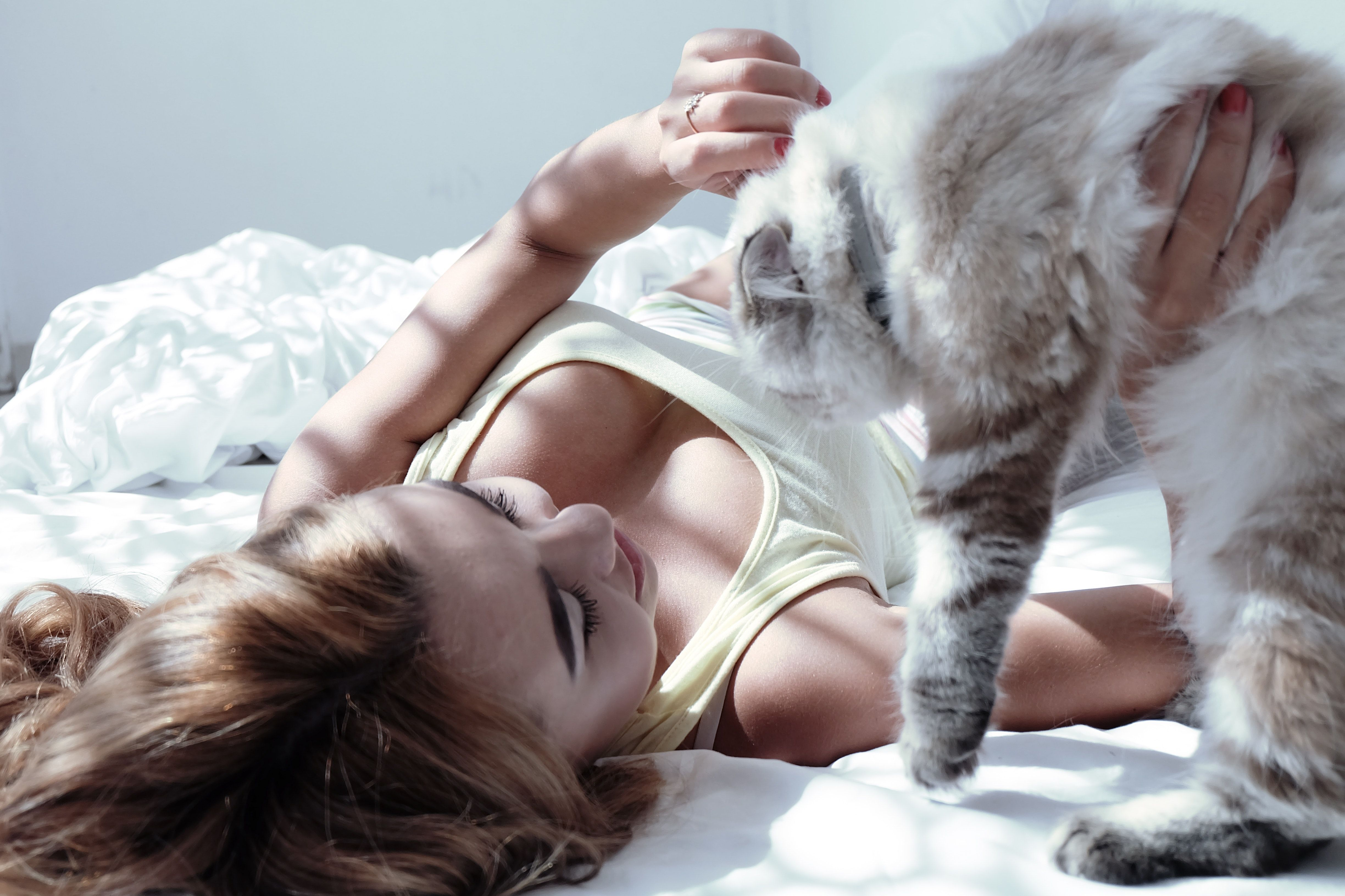 Is It Better To Sleep With Or Without A Bra Kittens Cutest Cute Kitten Gif Cat Owners