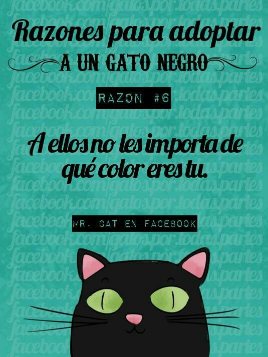 bcb5b7ac404 Razones para Adoptar un Gato Negro #6   gatito   Humor de gatos ...