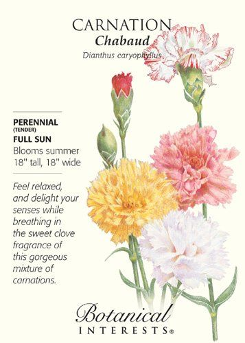 Amazon Com Chabaud Carnation Seeds 350 Mg Perennial Flowering Plants Patio Lawn Garden Carnation Flower Meaning Carnations Flower Meanings