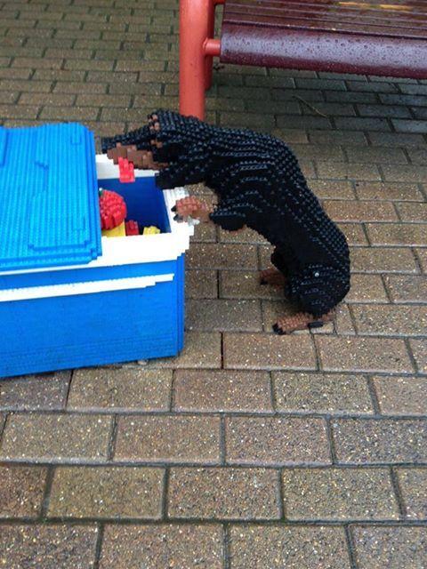 lego dog in cooler