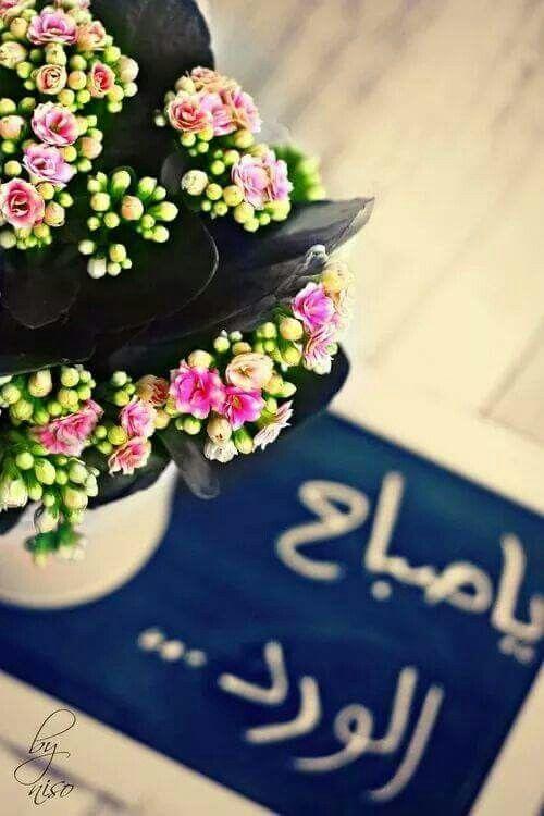 صباح الورد صور صباح الورود والحب والجمال والعسل احلي صور ورد مكتوب عليها صباحك ورد Good Morning Flowers Morning Love Quotes Good Evening Wishes