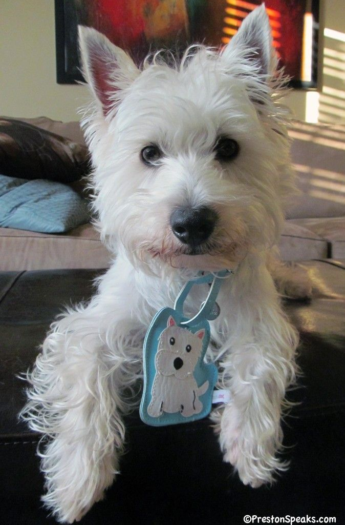 Foufou Dog Love Your Breed Review And Giveaway Closed Westie