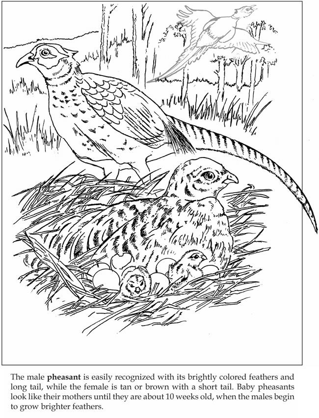 Welcome to Dover Publications Let\'s Explore! Forest Animals: Sticker ...