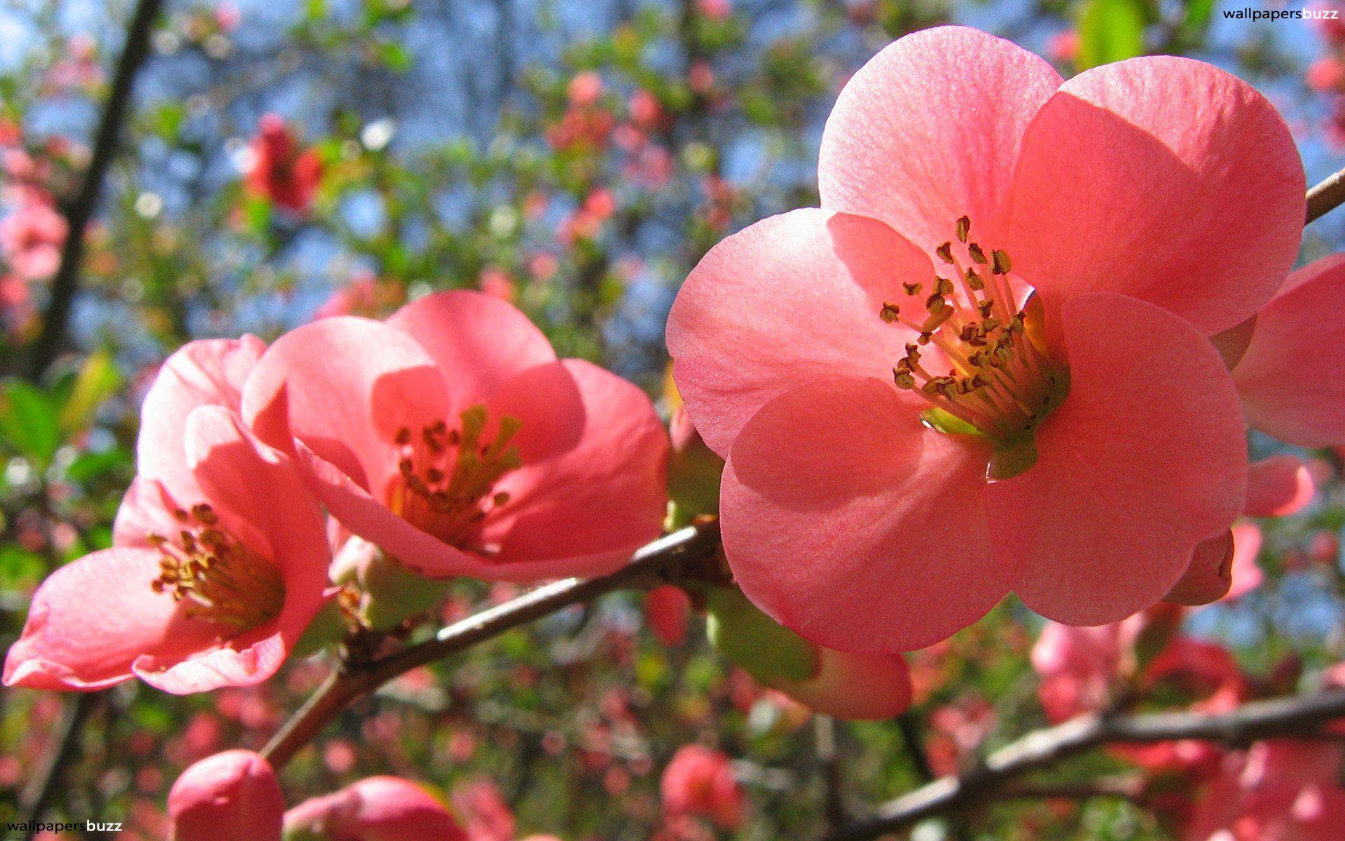 Beautiful Spring Flower Wallpaper Backgrounds