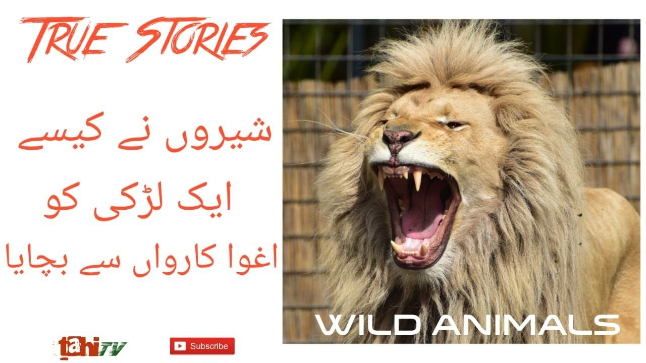 Wild Anilmals Saved Human Lives Urdu Hindi tahi tv in