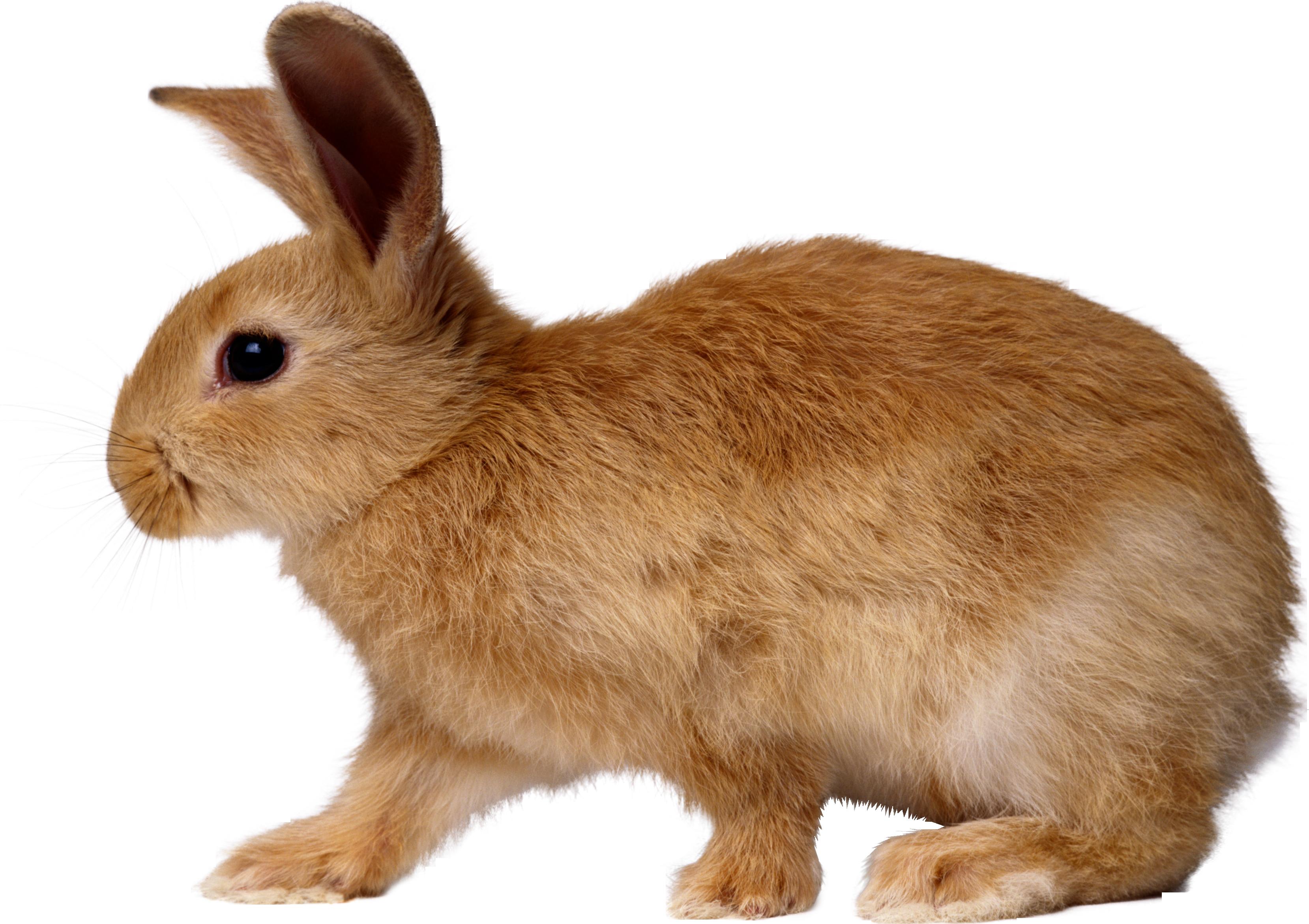 для картинки детям кролик этого звездная чета