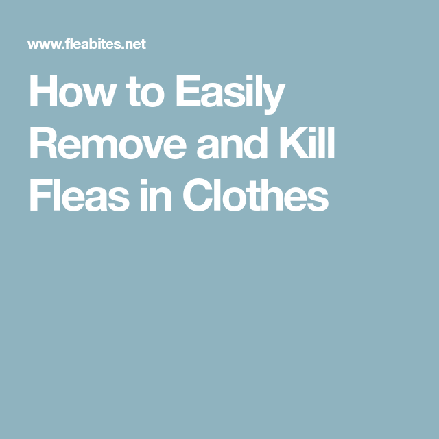 How To Easily Remove And Kill Fleas In Clothes With Images Fleas How To Remove Easily