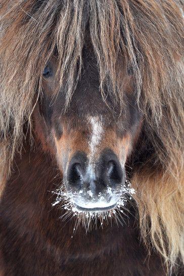Pin Von Anna Fassler Auf Pferde Pferde Pferde Fotografie Pferde Und Hunde