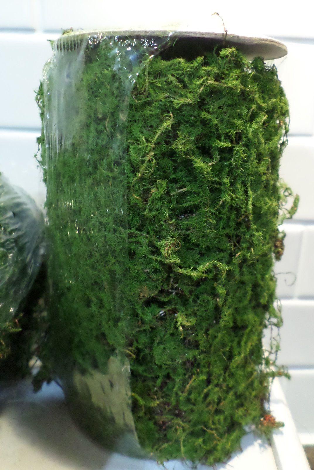 1 Moss Roll Mat Floral Decor Crafts Miniature Fairy Garden ...