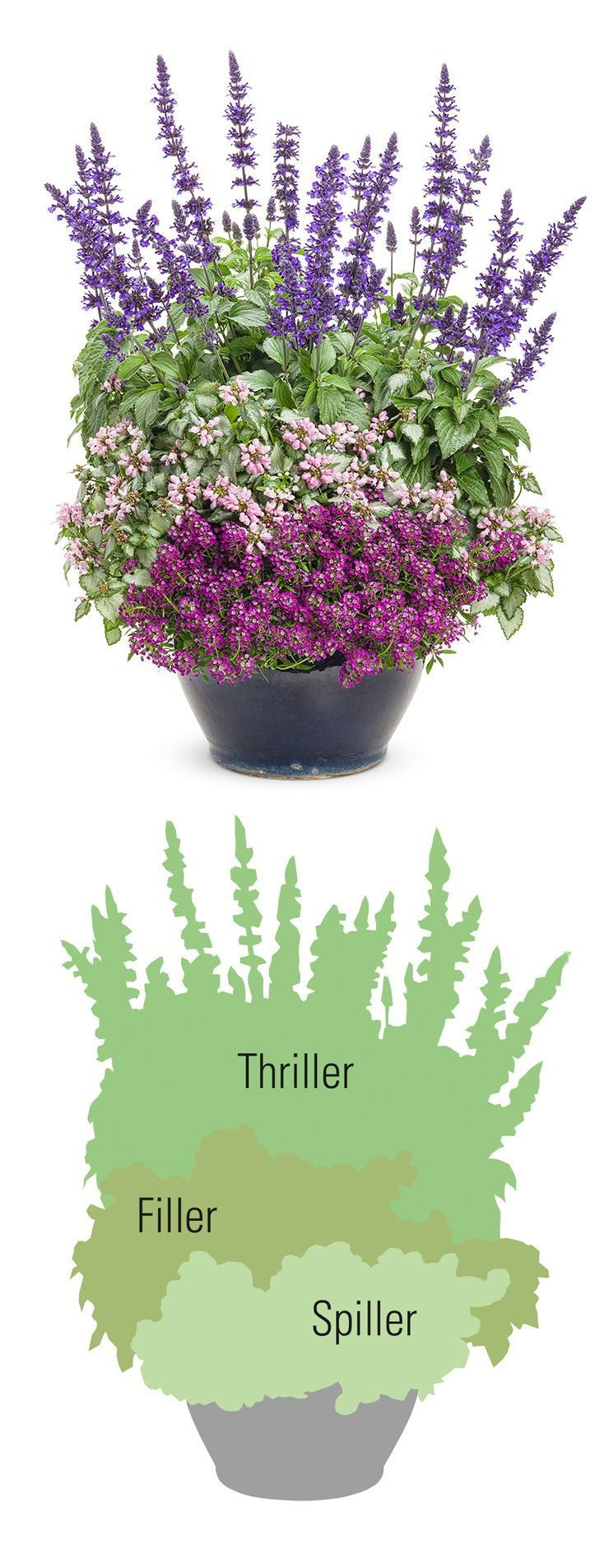"""If you're new to container gardening, here are some helpful terms and tips to help get you up to speed. The """"thriller, filler, spiller"""" method to planting a container is a great designer trick based on plant characteristics like height, mounding, foliage size, and more.If #you're #new #to #container #gardening, #here #are #some #helpful #terms #and #tips #to #help #get #you #up #to #speed. #The #""""thriller, #filler, #spiller"""" #method #to #planting #a #container #is #a #great #designer #trick #bas"""