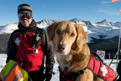 Ski Patrol Avalanche Dogs Working Dogs Dogs Dog Training
