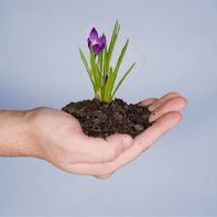 Mulch | St. Louis Composting, Enriching The Soil - Naturally - Since 1992. 636-861-3344