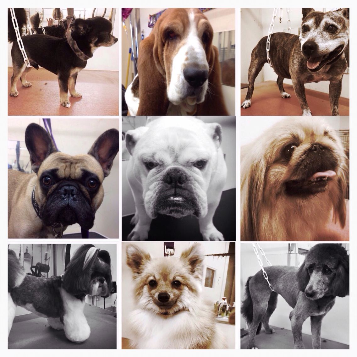 Handsome Hounds Professional Dog Grooming Studio Www