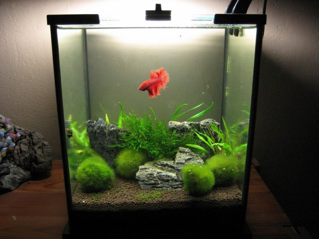 Aquarium fish 5 gallon tank - 5 Gallon Freshwater Nano Betta Tank