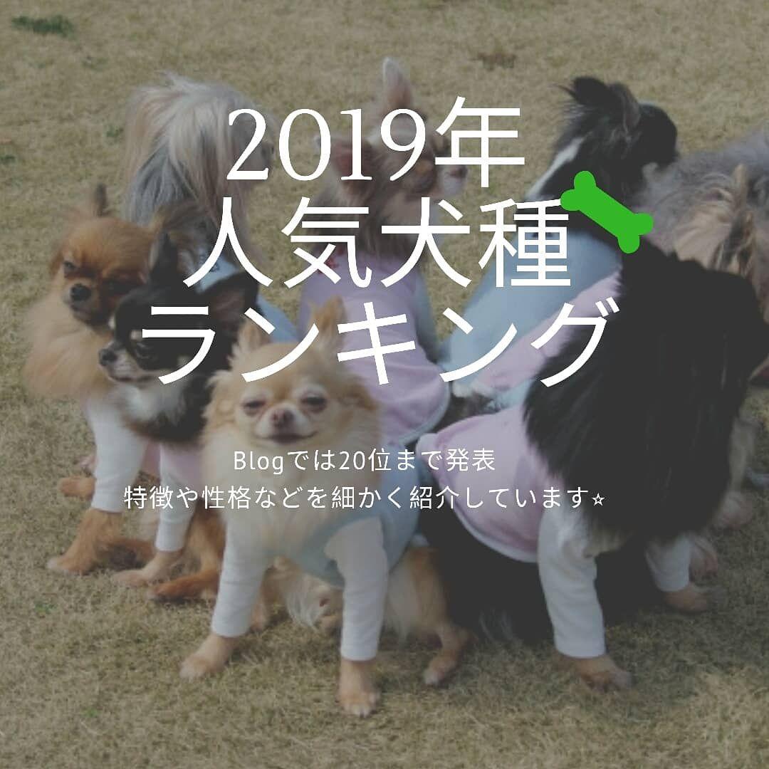 2019年の人気犬種ランキング 20位から1位を特徴や性格 魅力などを犬種別に紹介しています チェックしてわん Animals Dogs Art