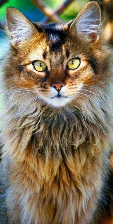 Katzenrassen Die Klein Bleiben In 2020 Katzen