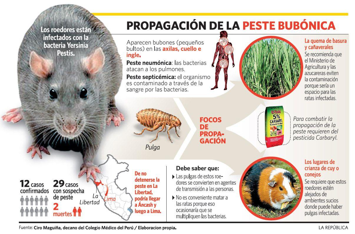 Remedios para la peste