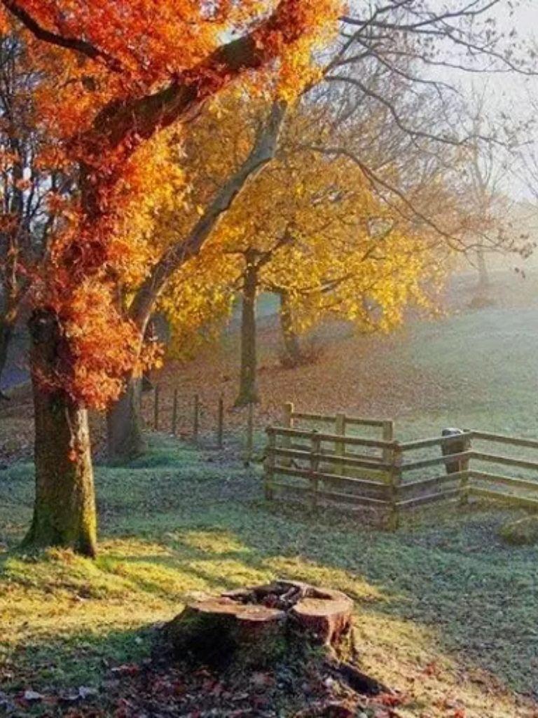 Beautiful Autumn Sunset: 1000+ Ideas About Autumn Scenery On Pinterest