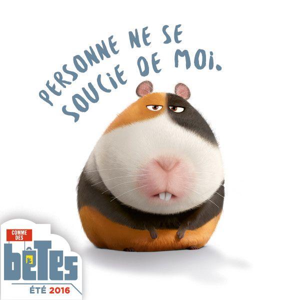 Comme Des Betes Bande Annonce Epingle Par Lmi Kids Sur The Secret Life Of Pets Comme Des Betes