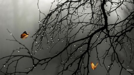 Rainy Day Butterflies Spring Fog Mist Tree Shower Black And