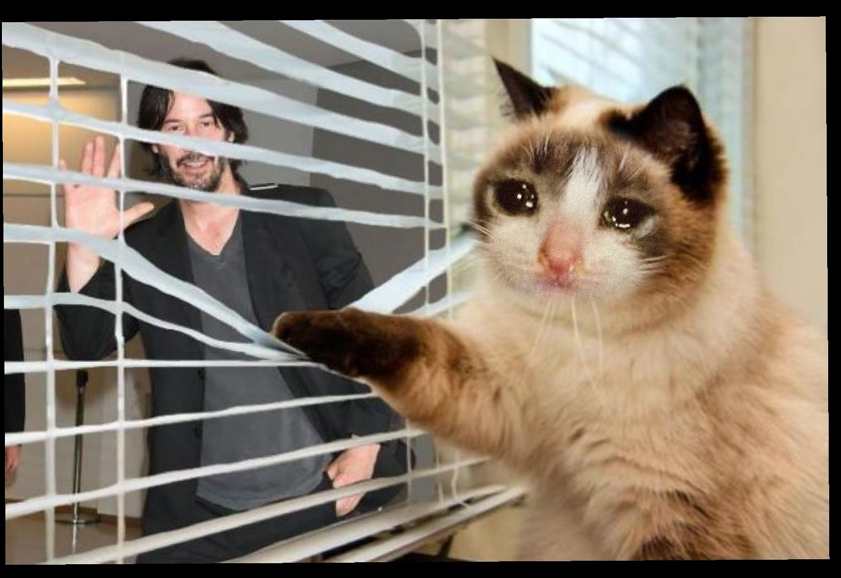 Pin en Sad Cats
