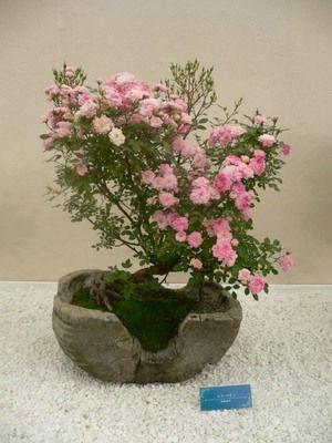 強烈なメッセージ性。 : 素晴らしき薔薇盆栽の世界 日本に生まれてきてよかったと思える32枚の画象。 - NAVER まとめ