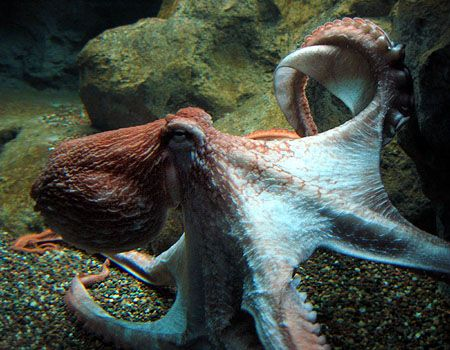 Octupi. Octopuses. The squishy things with lots of arms. I love 'em.