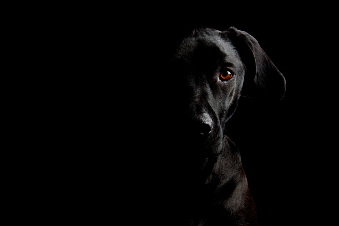 Two Face By Michael Huebscher On 500px Dog Photography Dog