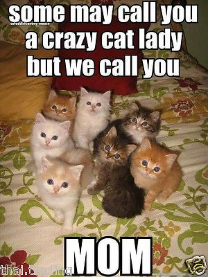 """Best Funny Cute Funny Cute Cats Animal Photo Fridge Magnet 2""""x3"""" Collectibles  