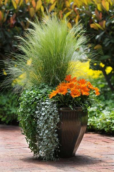 Make this into a Fall container by planting purple grass, purple spillers and orange mums.