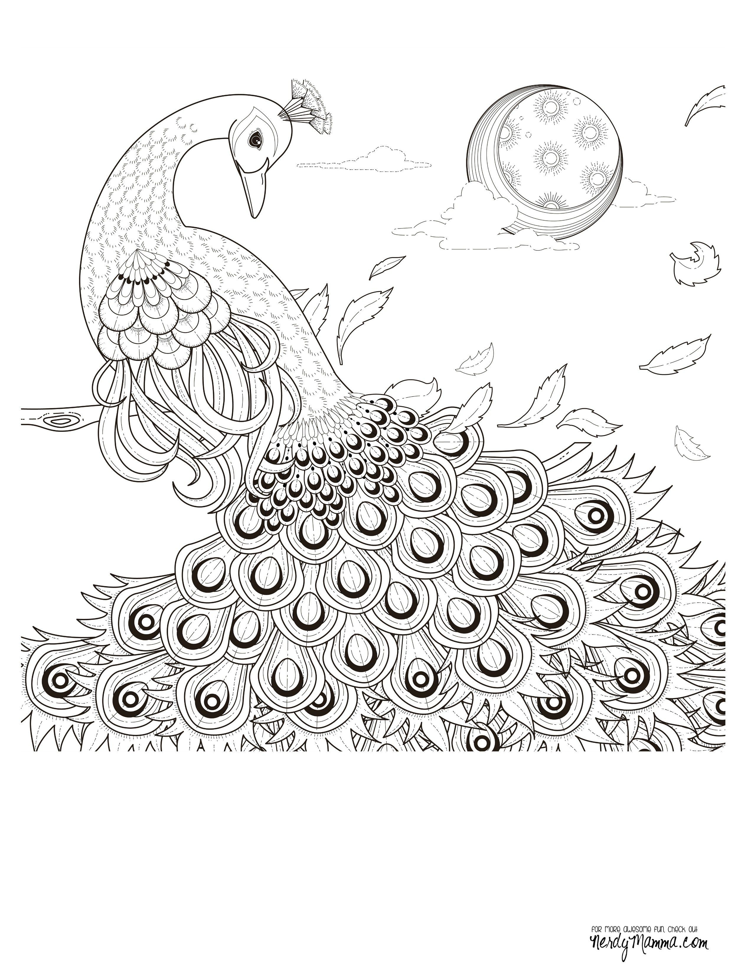 Free coloring pages of peacock feathers coloring everyday printable - 11 Free Printable Adult Coloring Pages