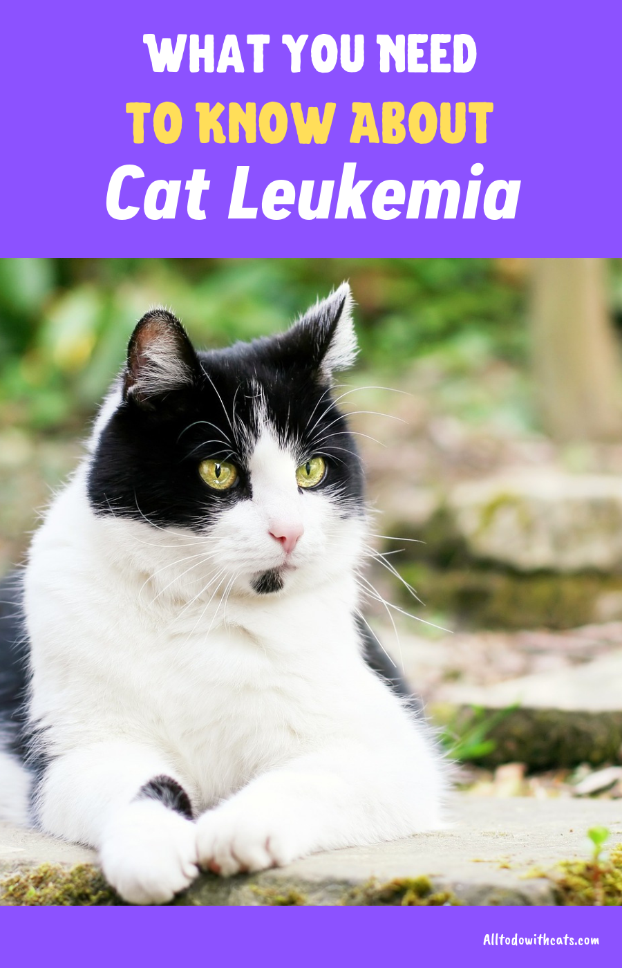 What Are The Signs Of Feline Leukemia What You Need To Know In 2020 Feline Leukemia Cat Illnesses Cat Diseases