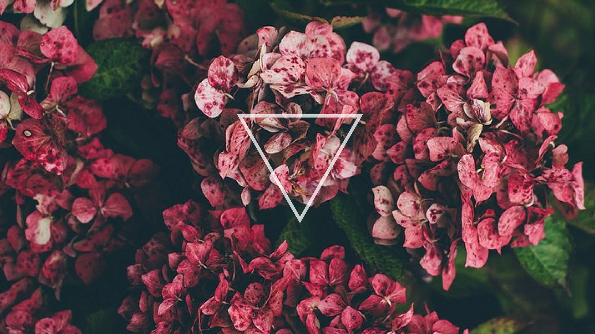 flowers triangle desktop wallpaper background tumblr