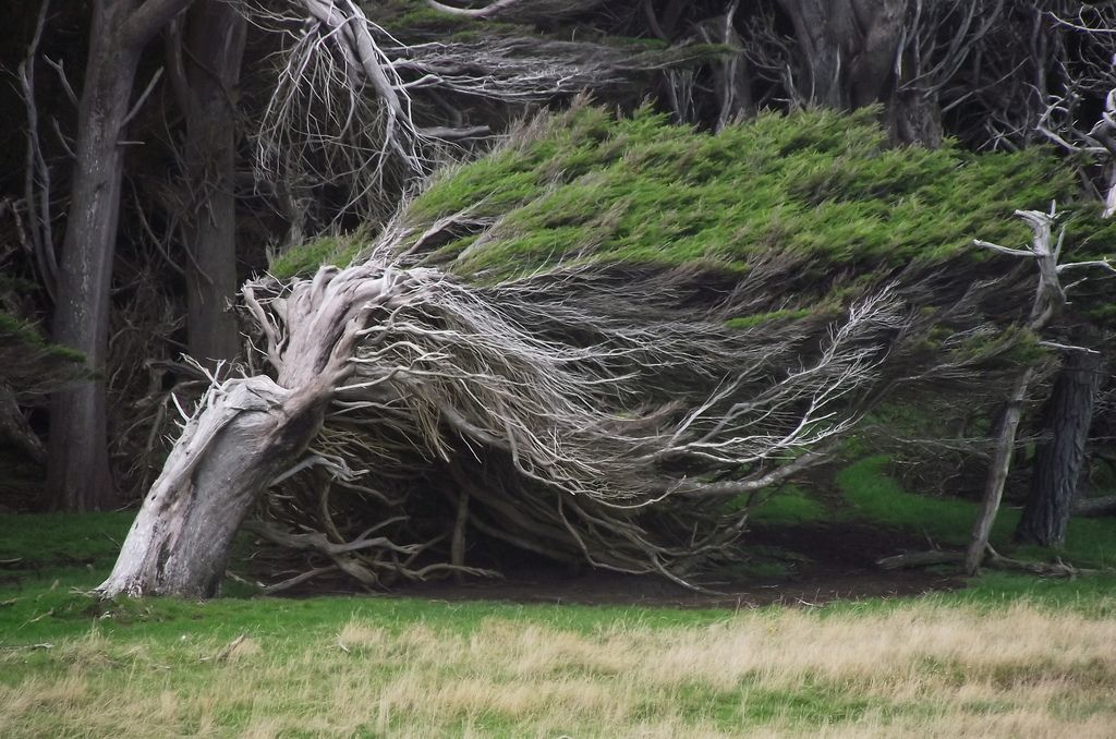 The Twisted Trees of Slope Point, New Zealand.