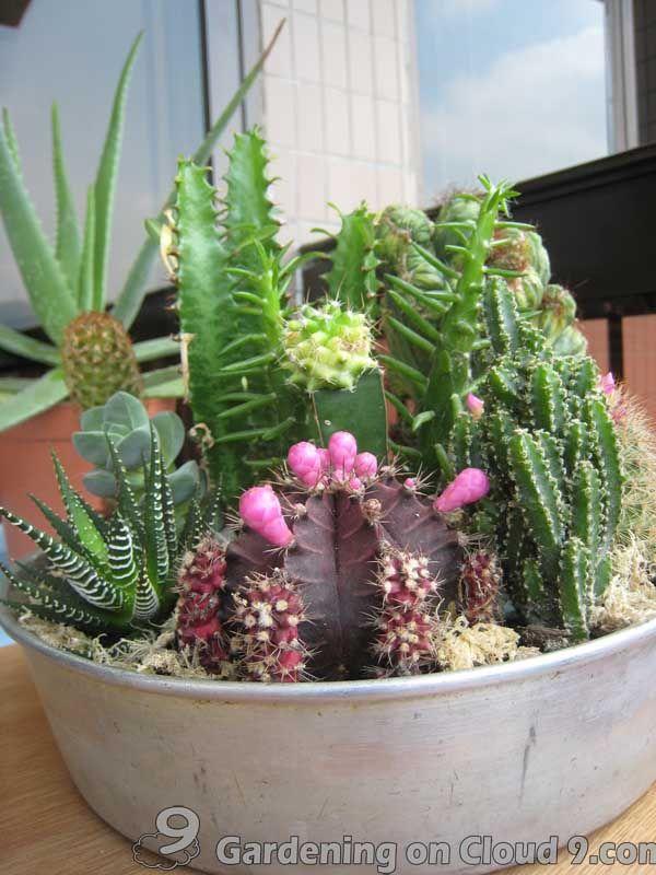 Indoor Cactus Garden Ideas Part - 28: Indoor Cactus Garden U2026