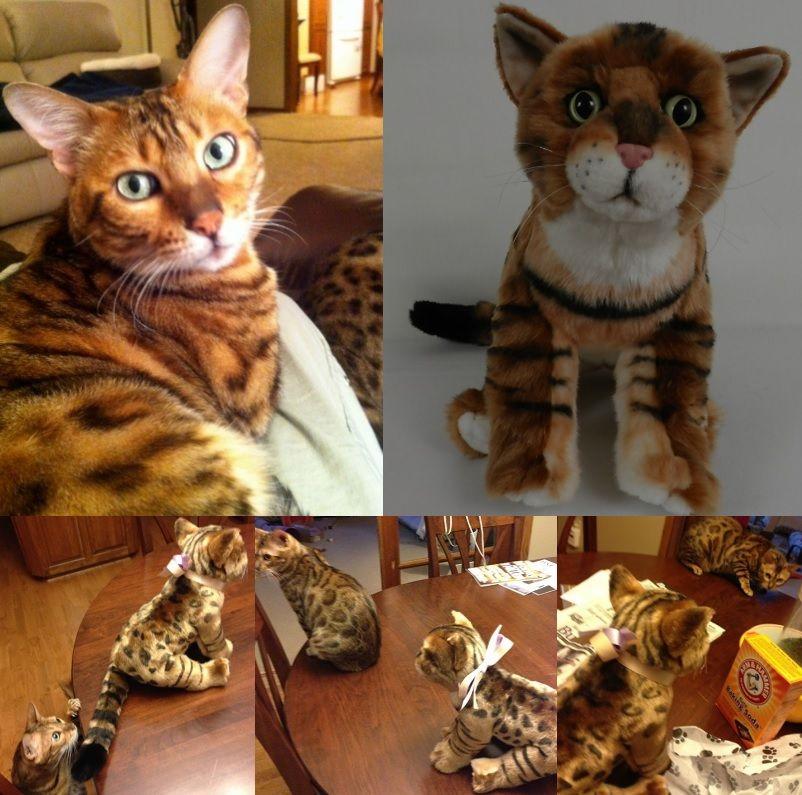 100 custom stuffed animals made to look just like your
