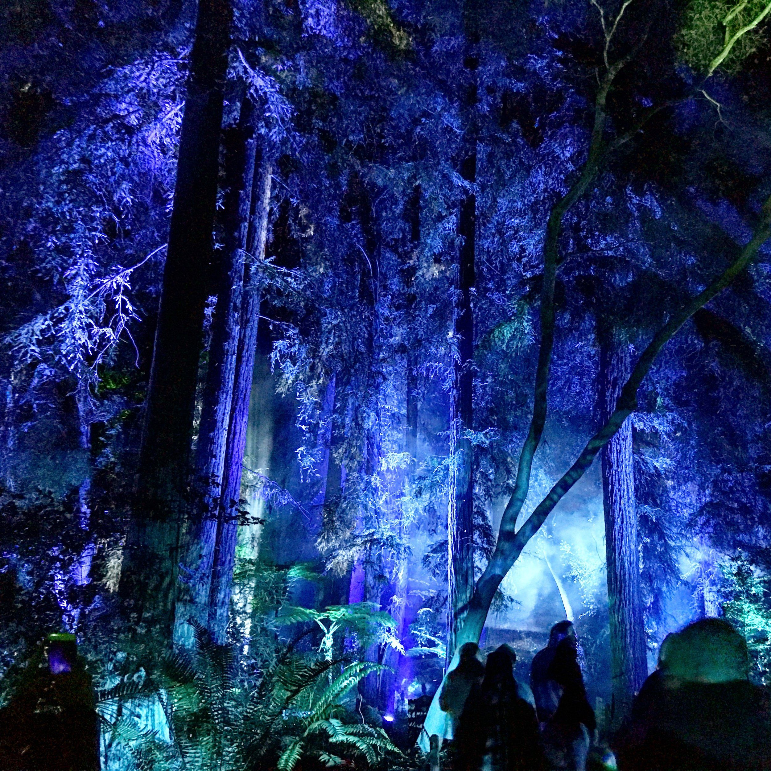 55d665c264011b7d84b53d121300b664 - Enchanted Forest Of Lights At Descanso Gardens