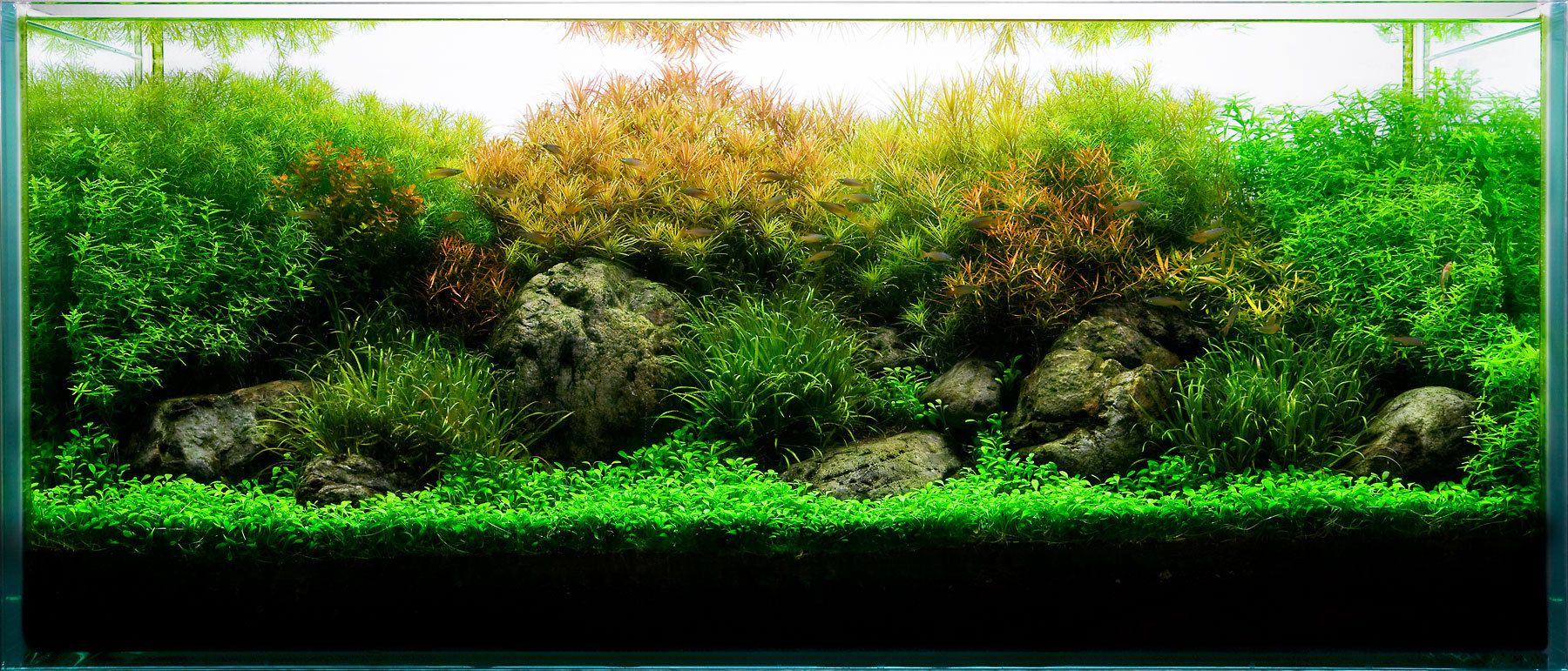 Aquarium design group a planted aquarium with for Planted tank fish