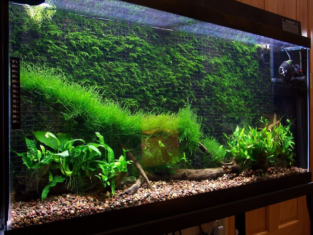 Superbe Cool Thing To Do With Java Moss.