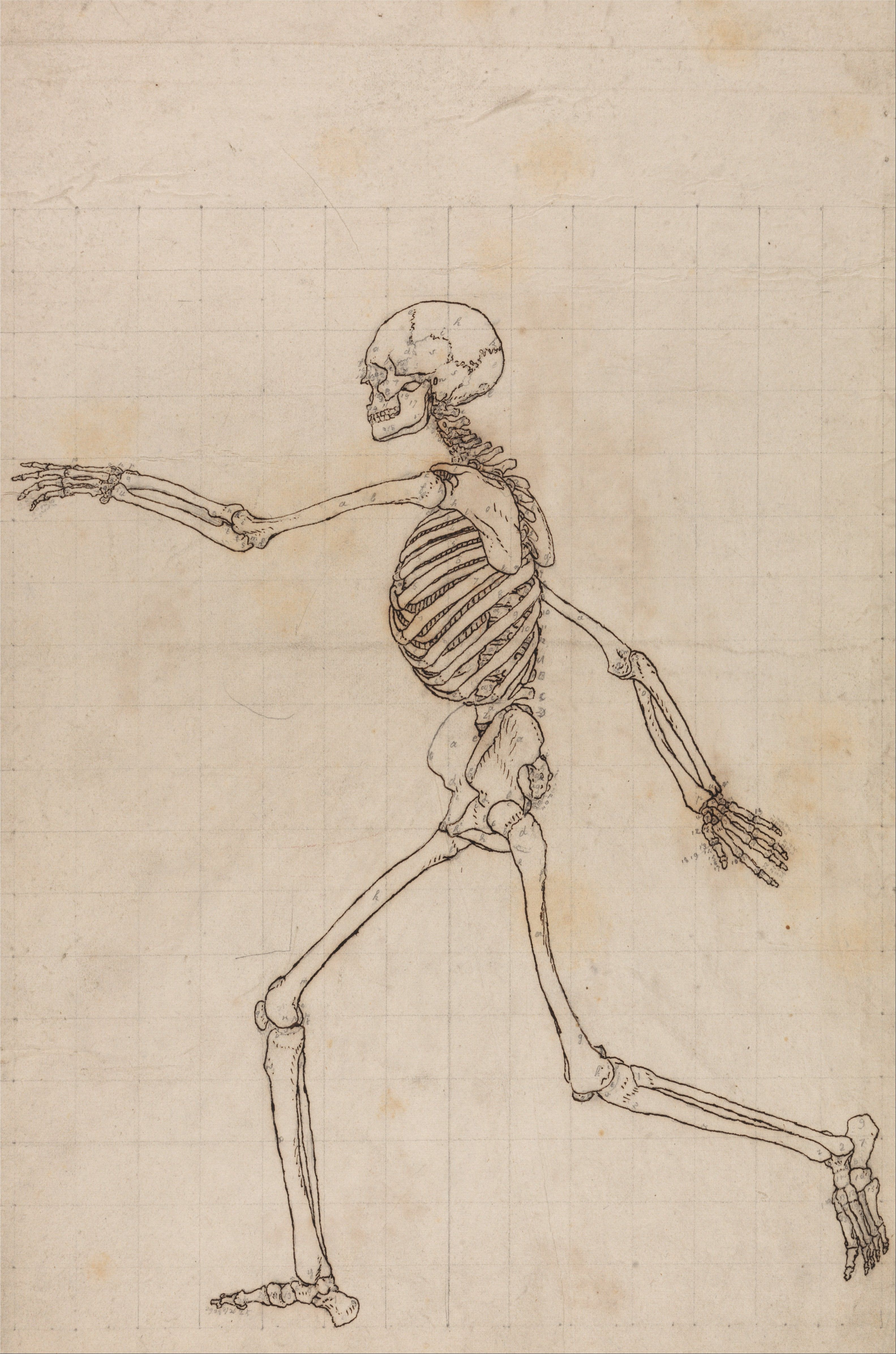 A Comparative Anatomical Exposition Of The Structure Of