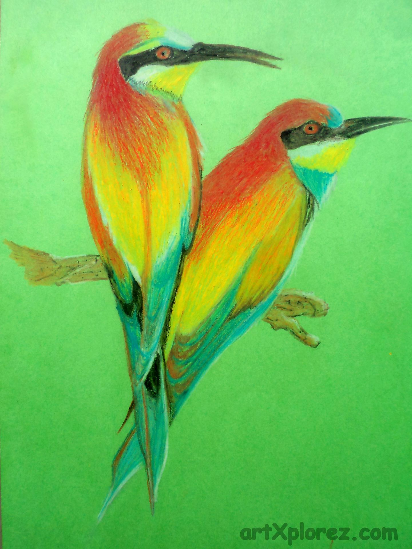 Drawing Birds Using Oil Pastels