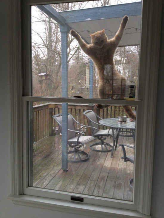 Let me in,.........PLEASE!