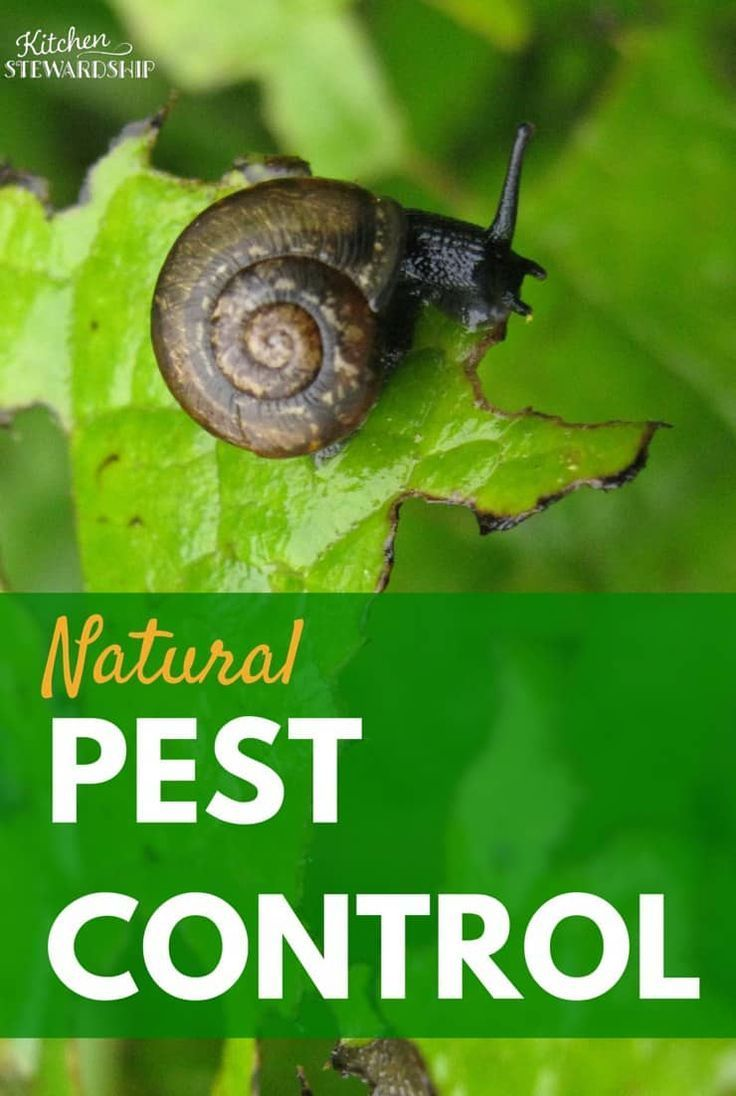 Ways to Control Pests in Your Organic Garden