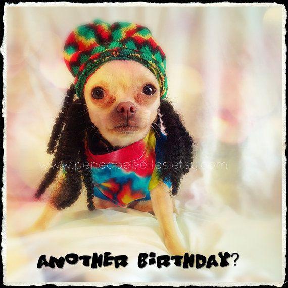 Chihuahua Birthday Card Chihuahua Reggae Dread Locks Card Funny – Chihuahua Birthday Cards